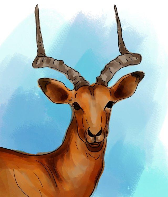 deer (466).jpg