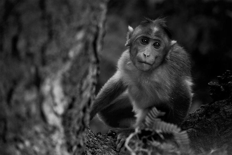 monkey b&w.jpg
