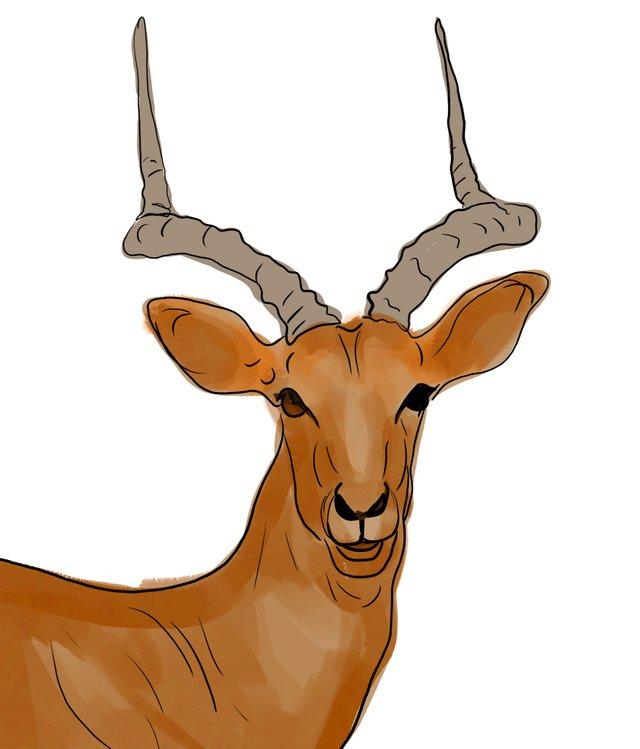 deer (462).jpg
