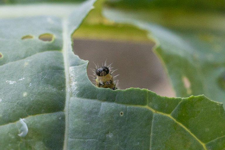 caterpillar nature entry9639.jpg