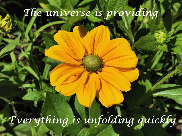 the universe is providing.jpg