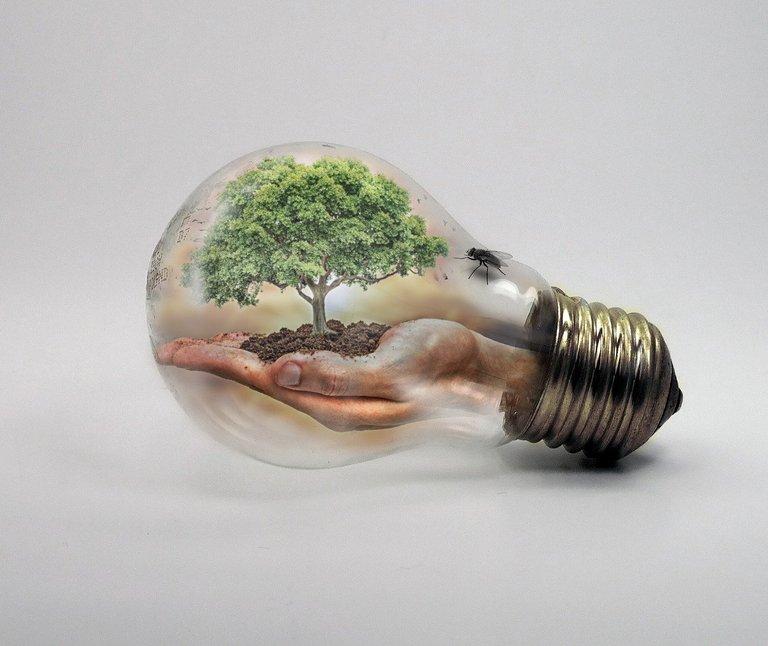 bulb-2368396_1280.jpg