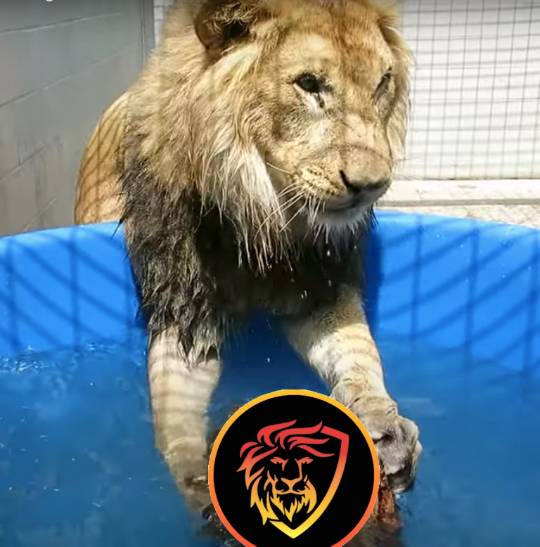 leo with lion.png