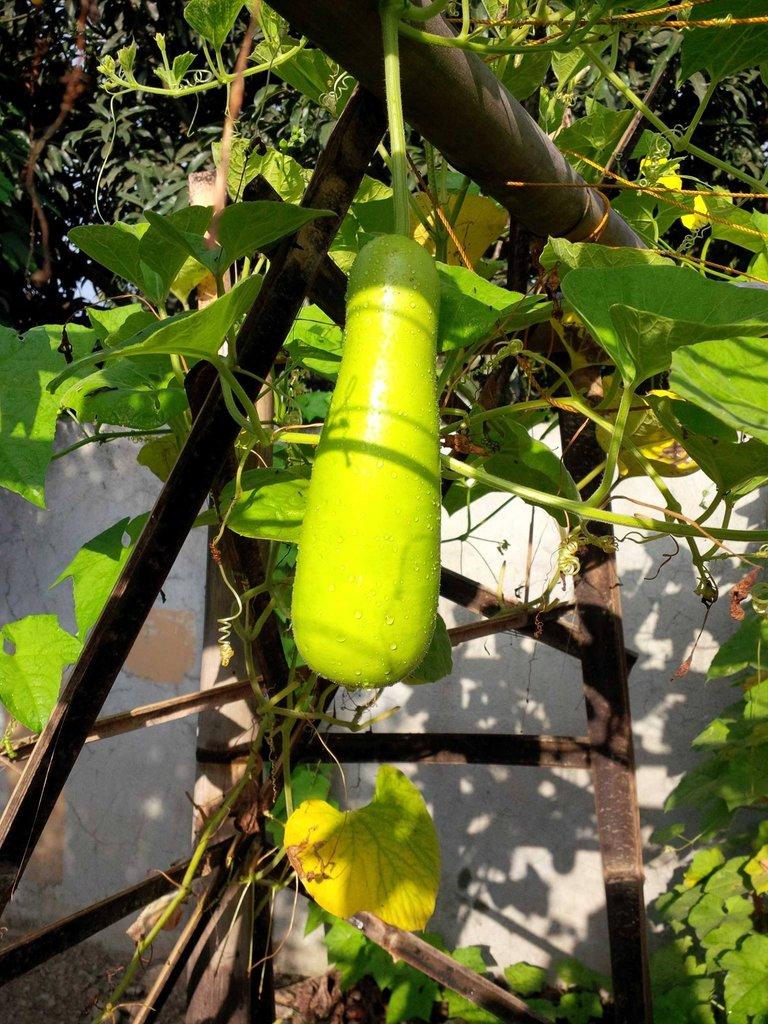 gardening gourd.jpg