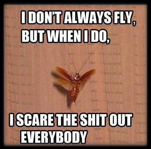 Fly_cockroach_Fly.jpg