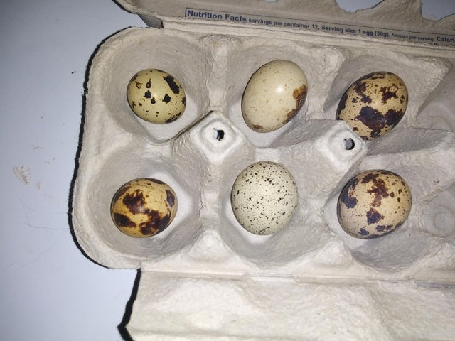 day four eggs.jpg