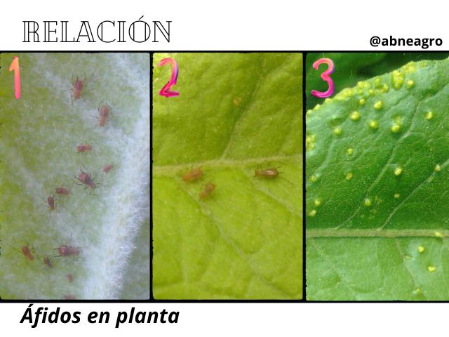 Hymenoptera 3.3.png