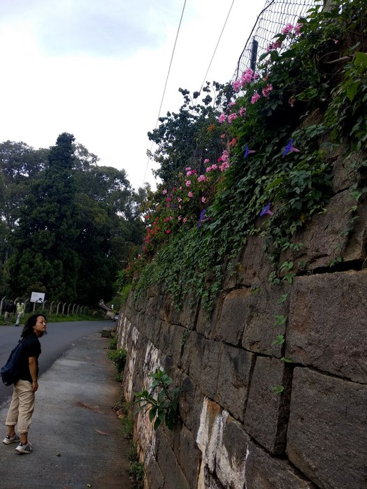 Told you, there is no corner where we didn't stop and appreciated the beauty, even if it meant just the walls of houses! ;)