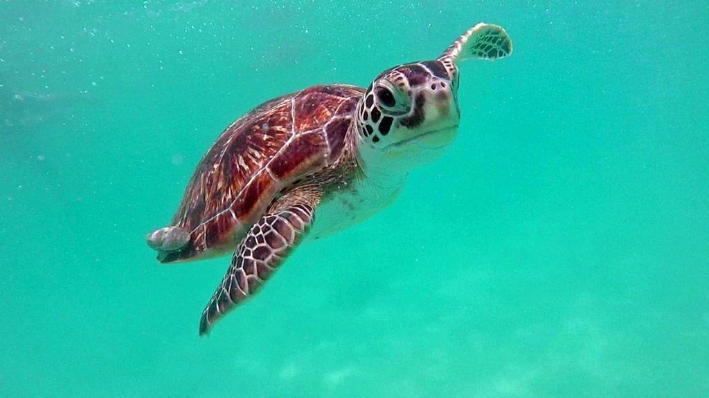 redang-turtles-1.jpg