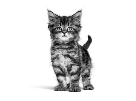 steemkitten image by royal canin