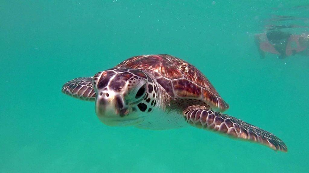 redang-turtles-2.jpg