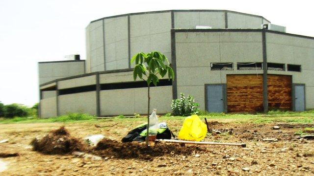 Sexta Ceiba