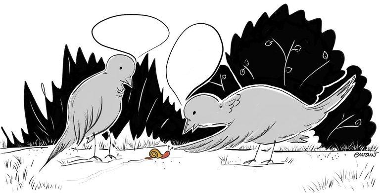 birds snail contest.jpg