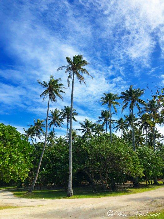 marae coconut grove.jpg