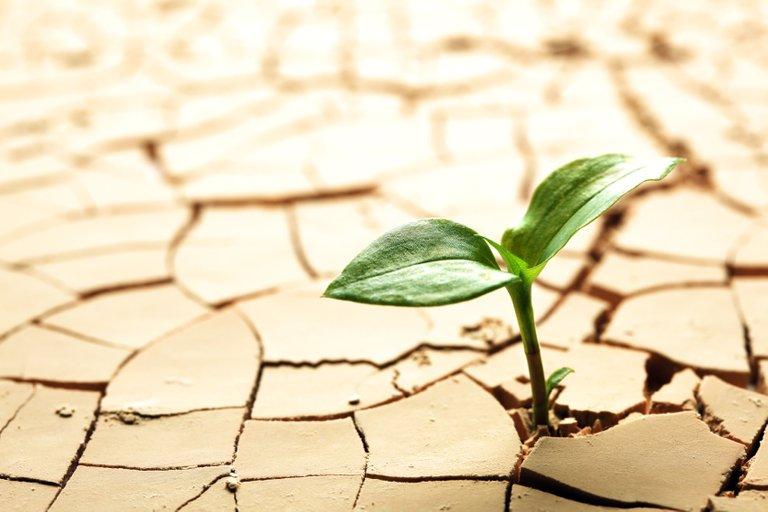 seedling-through-cracks.jpg