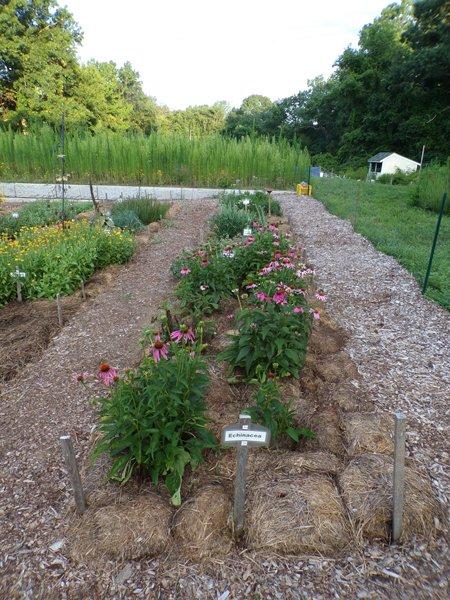New Herb  Row 7 crop July 2020.jpg