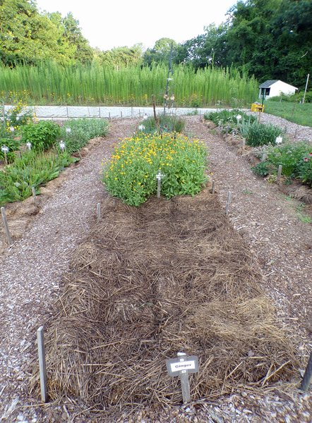 New Herb  Row 6 crop July 2020.jpg
