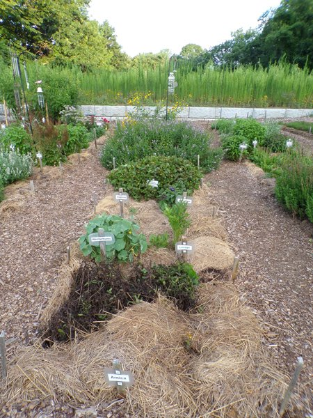 New Herb  Row 4 crop July 2020.jpg