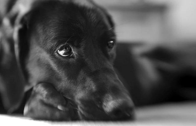 blackdogcloseupwallpaperpreview.jpg