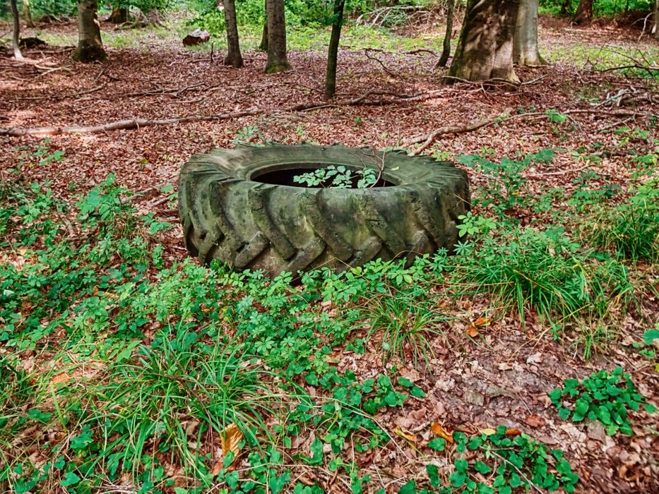 Russian tire, left in a forest.