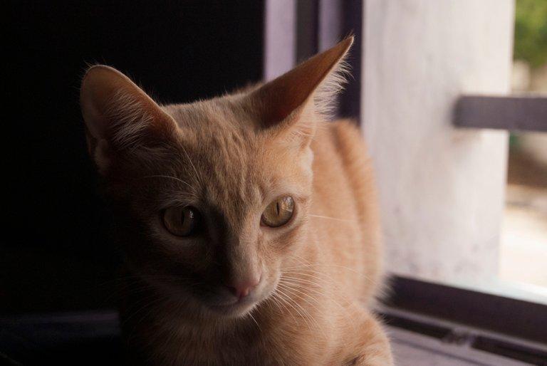 CAT9.jpg