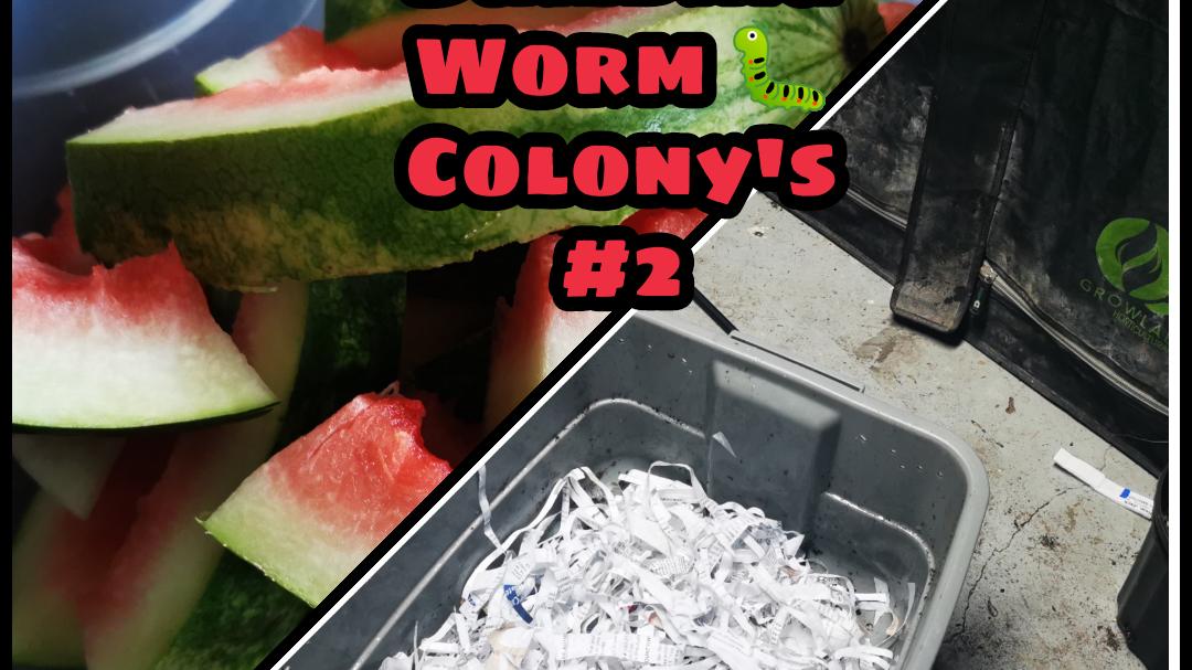 Building Worm Colony - Episode #2