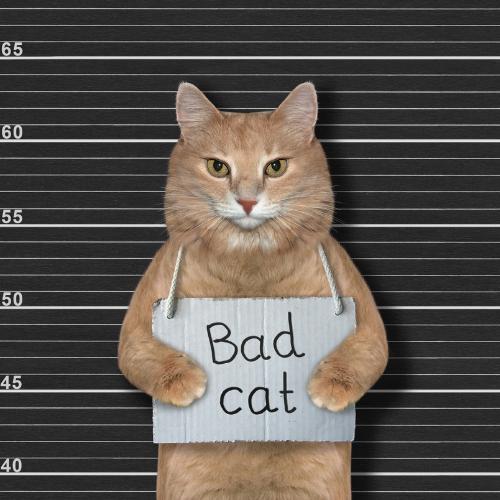 Jail-cat.png