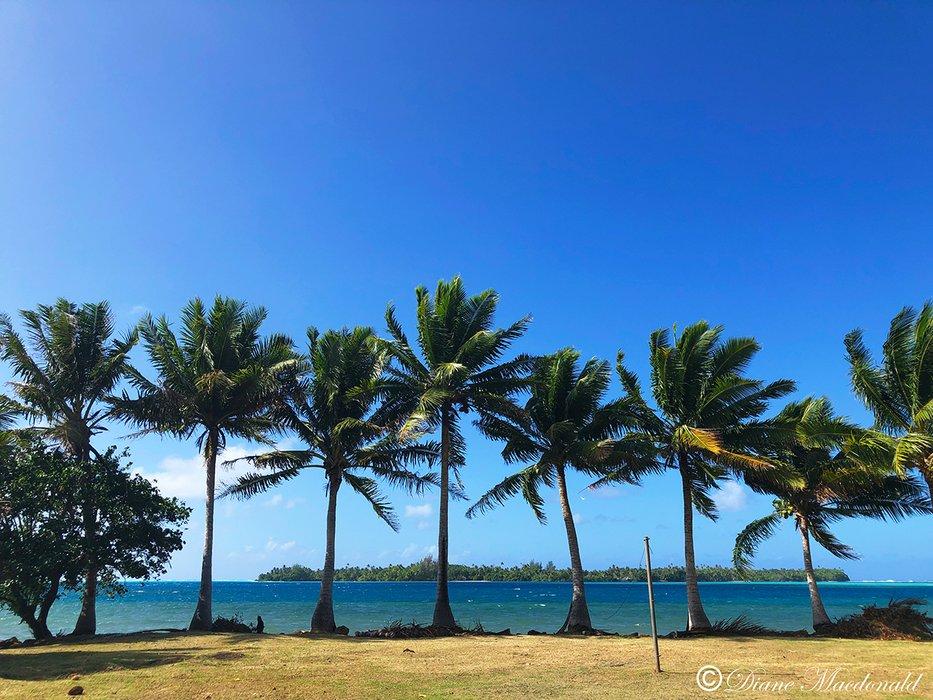 row of palms parea huahine.jpg