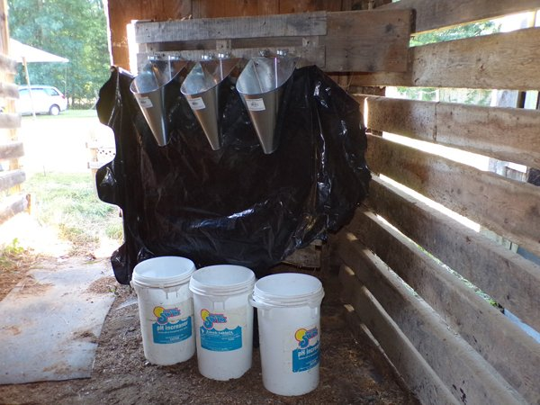 Freezer Camp  killing cones crop Sept.2020.jpg