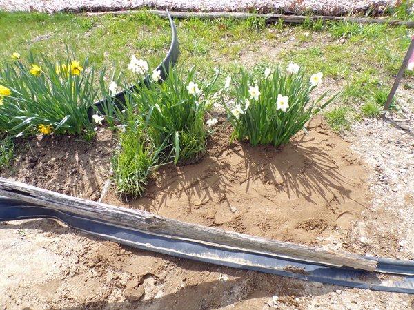 1st Fence  garden repair2 crop April 2020.jpg
