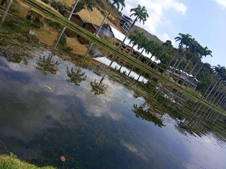 En el lago habían muchísimas tortuguitas, pero no se mostraban en la foto :( - In the lake there were lots of little turtles, but they were not shown in the photos :(