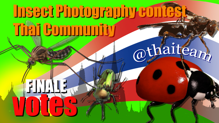 insect%20Photography%20finale%20votes2.png