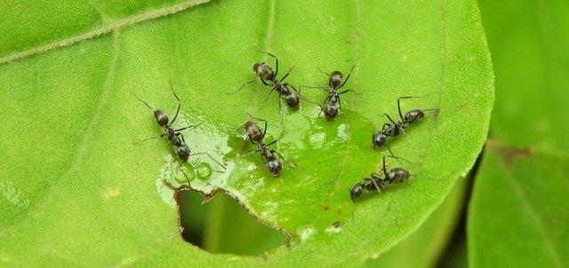 ants in my garden