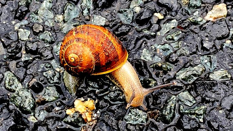 snail1.png