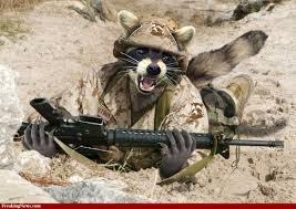raccoonwrifle.jpg