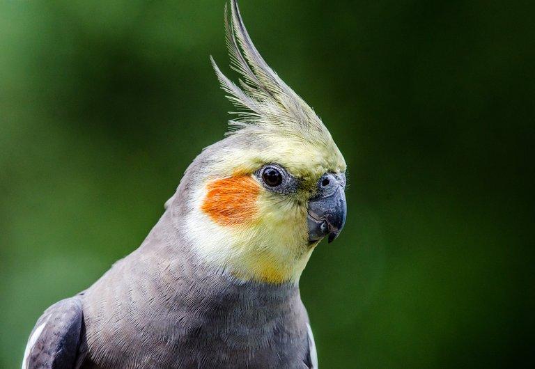 Bird 49.jpg