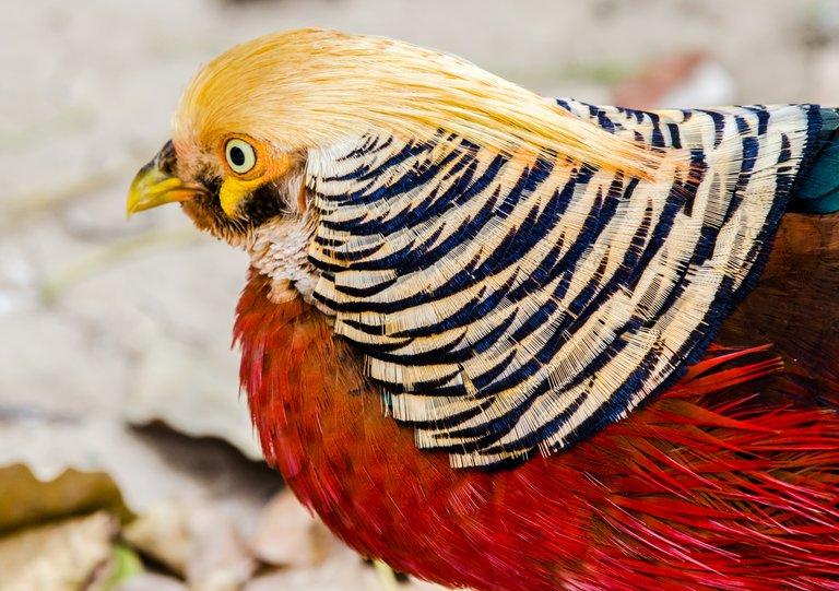 Bird 64.jpg