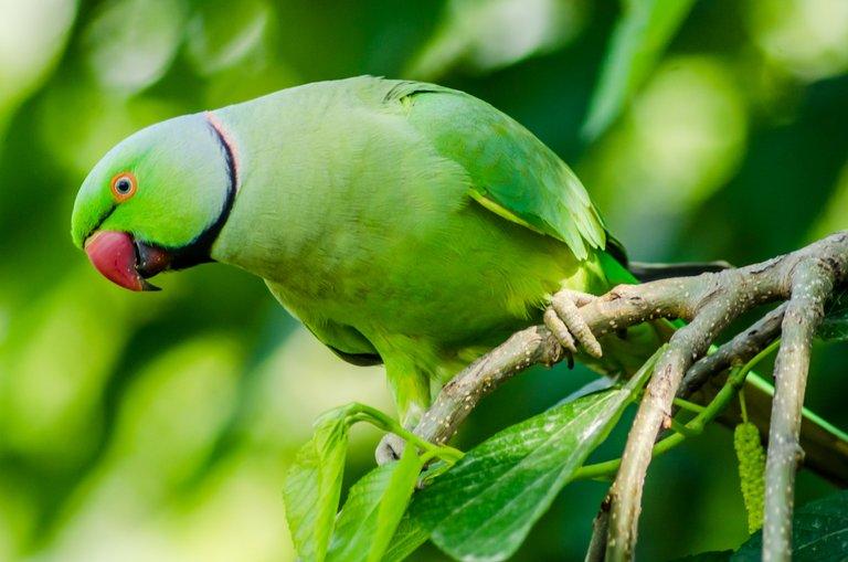 Bird 36.jpg
