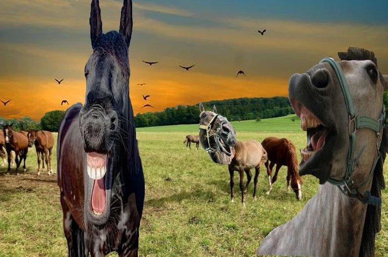 pferde spaß.jpg