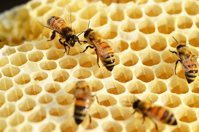 Source: https://pixabay.com/photos/bees-building-honeycomb-honey-352206/