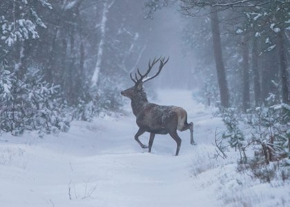Winter in the Netherlands! Hiking on the Veluwe!