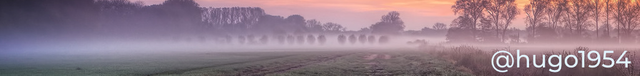 comentarios-banner-elefanti-tramonto-1023x121.png