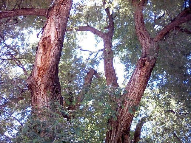 Emmy's real parent tree i think 2.jpg