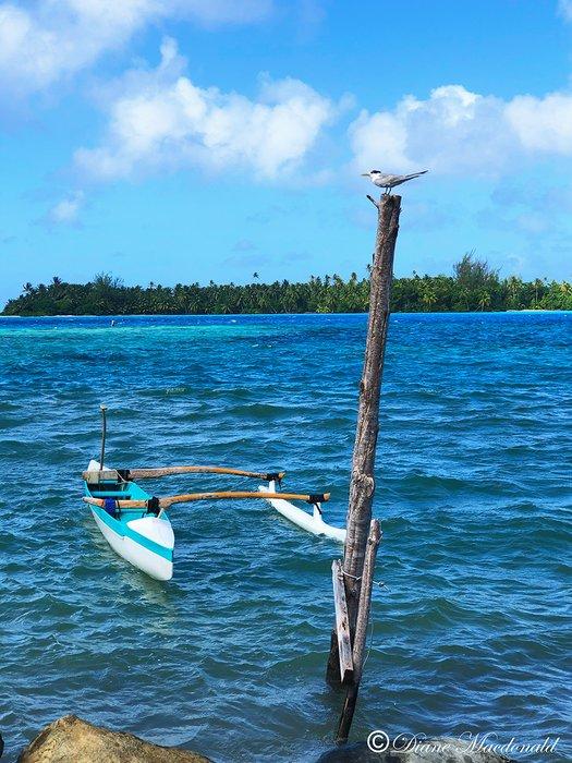 outrigger canoe seabird parea huahine.jpg