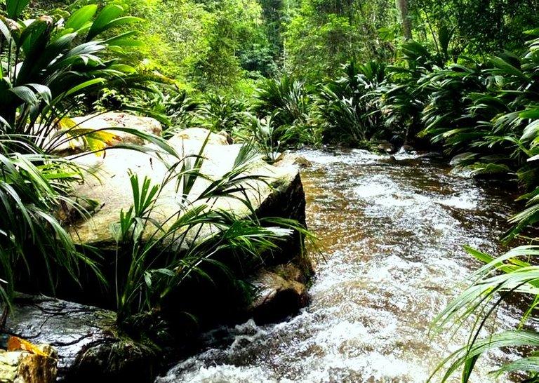 selva2.jpg
