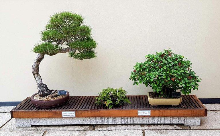 Bonsai Trees Exhibit At Everland Hive