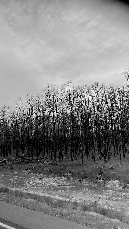 bushfire regen1.png