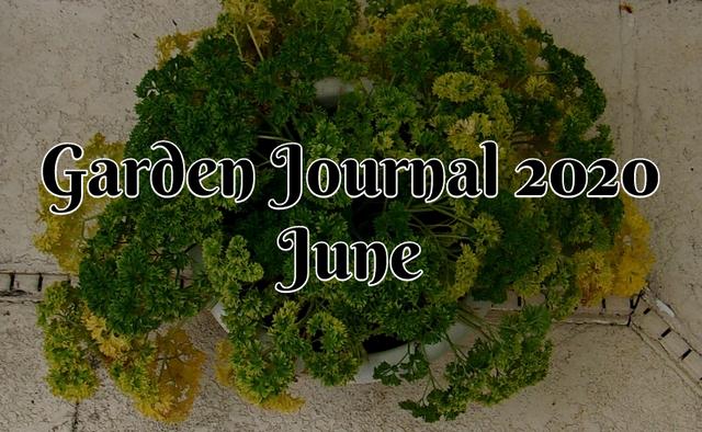 Garden Journal 2020 June.png