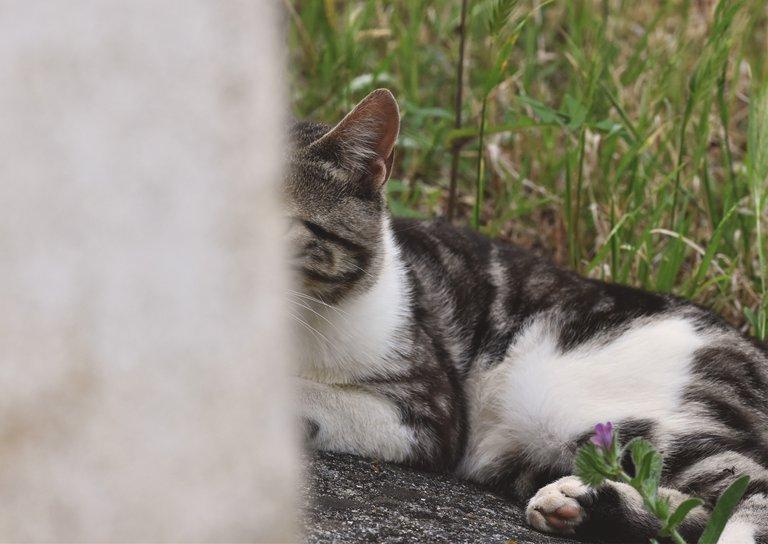 kitty countryside wall 2.jpg