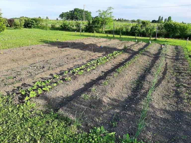 neue Gartenfläche 0.2.jpg